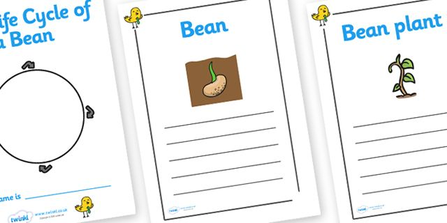 how to plant a bean seed instructions ks1