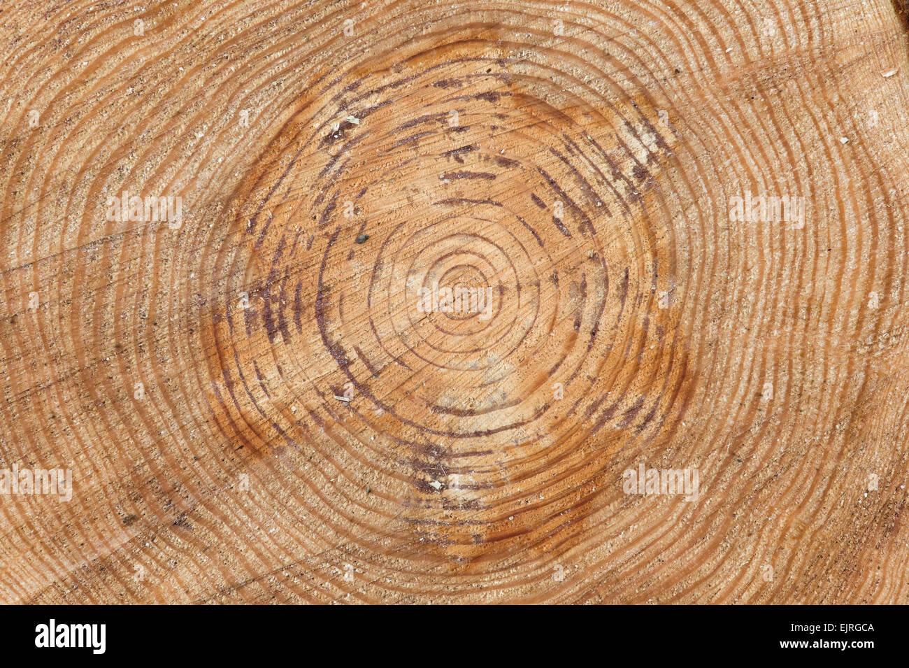 minuterie woods instruction en francais