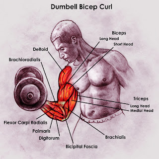 supinating bilateral curls instruction