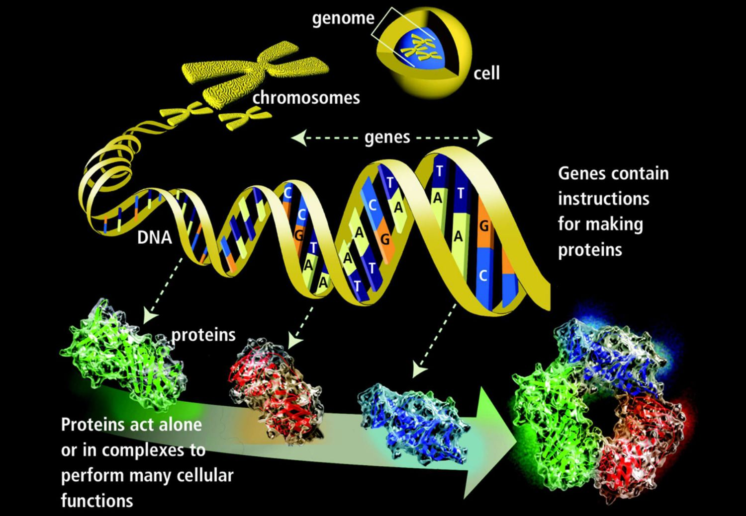 functional units of dna that contain instructions